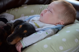 This is a Snoot dog (and kid #2)